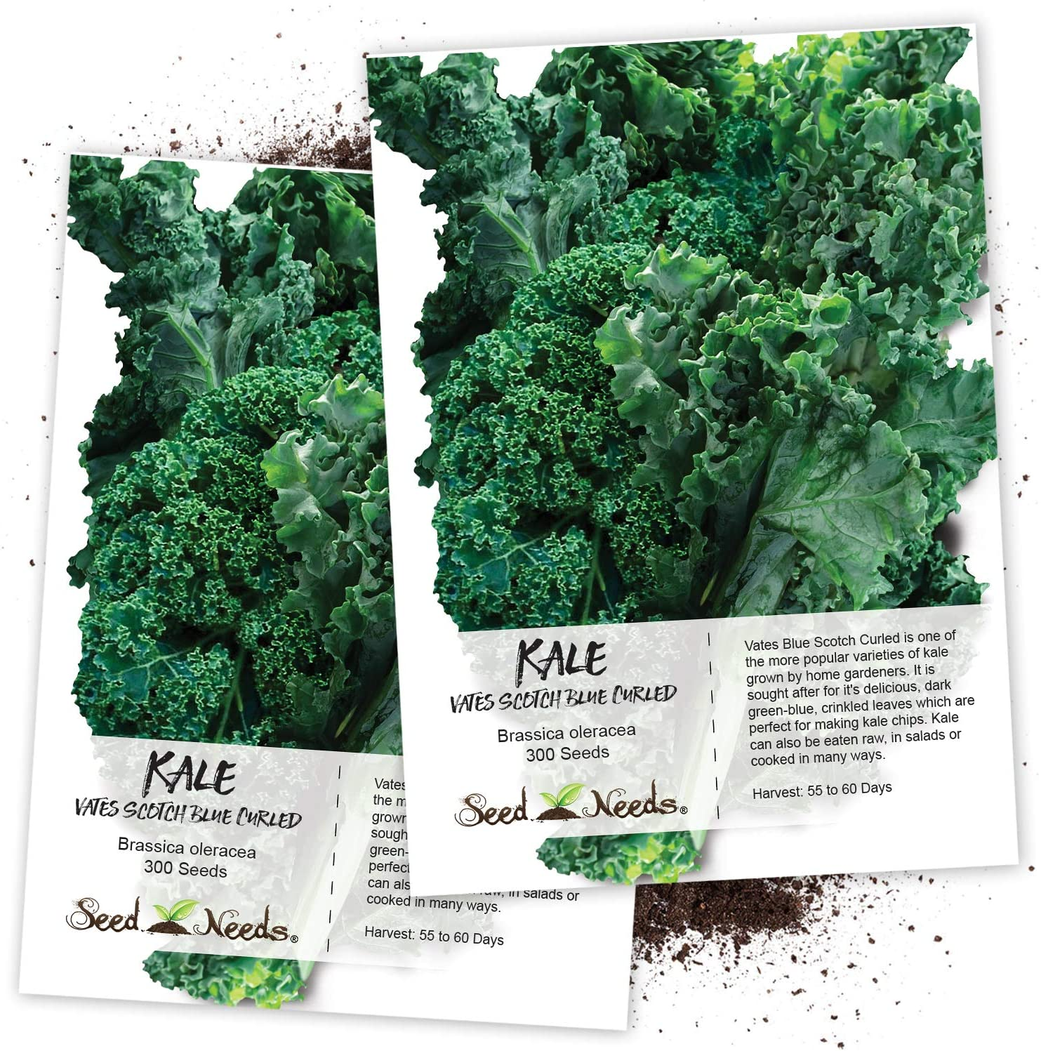 Seed Needs, Vates Blue Scotch Curled Kale (Brassica oleracea) Twin Pack of 300 Seeds Each Non-GMO