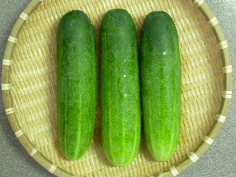Variety of cucumbers libella: description, reviews 55