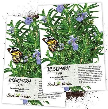 Amazon Com Seed Needs Rosemary Culinary Herb Rosemarinus