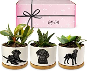 GIFTAGIRL Black Lab Gifts for Women - Our Black Lab Succulent Planters Make Great Black Labrador Retriever Gifts and are Perfect Black Labrador Gifts for Black Lab Lovers