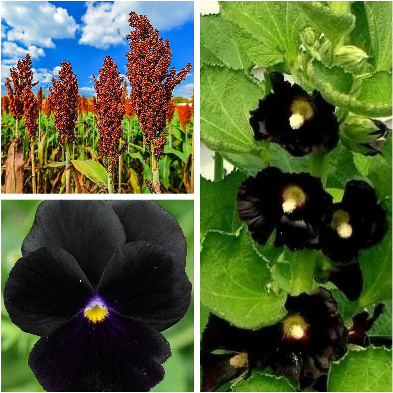 Mamba negra - semillas de 3 especies de plantas con flores - 3 paquetes de semillas