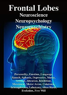 amazon com temporal lobes occipital lobes memory language