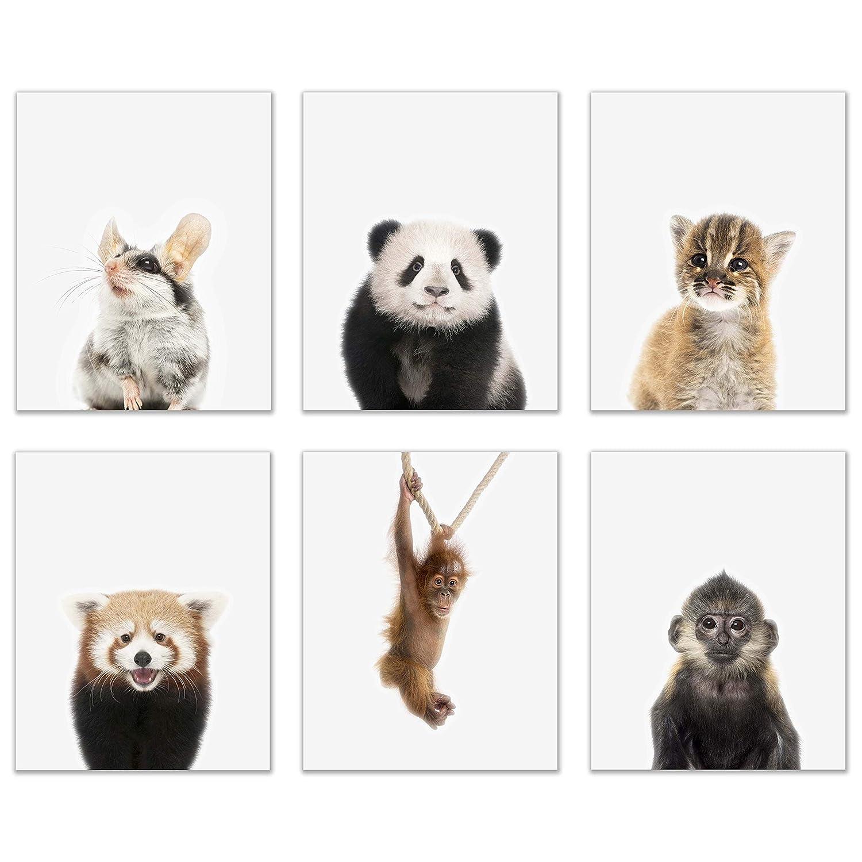 Baby Oriental Animals Poster Prints - Set of 6 (8x10) Cute Furry Adorable Asian Portraits Wall Art Nursery Decor - Garden Dormouse - Red Panda - Golden Cat - Giant Panda - Francois Langur - Orangutan