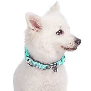 New Puppy Checklist: Adjustable Collar for Puppy