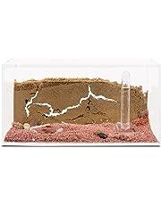 AntHouse Ameisenfarm Starterkit (Ameisen mit Königin Free).