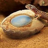 SunGrow Reptile Water Bowl 100% Natural Coconut