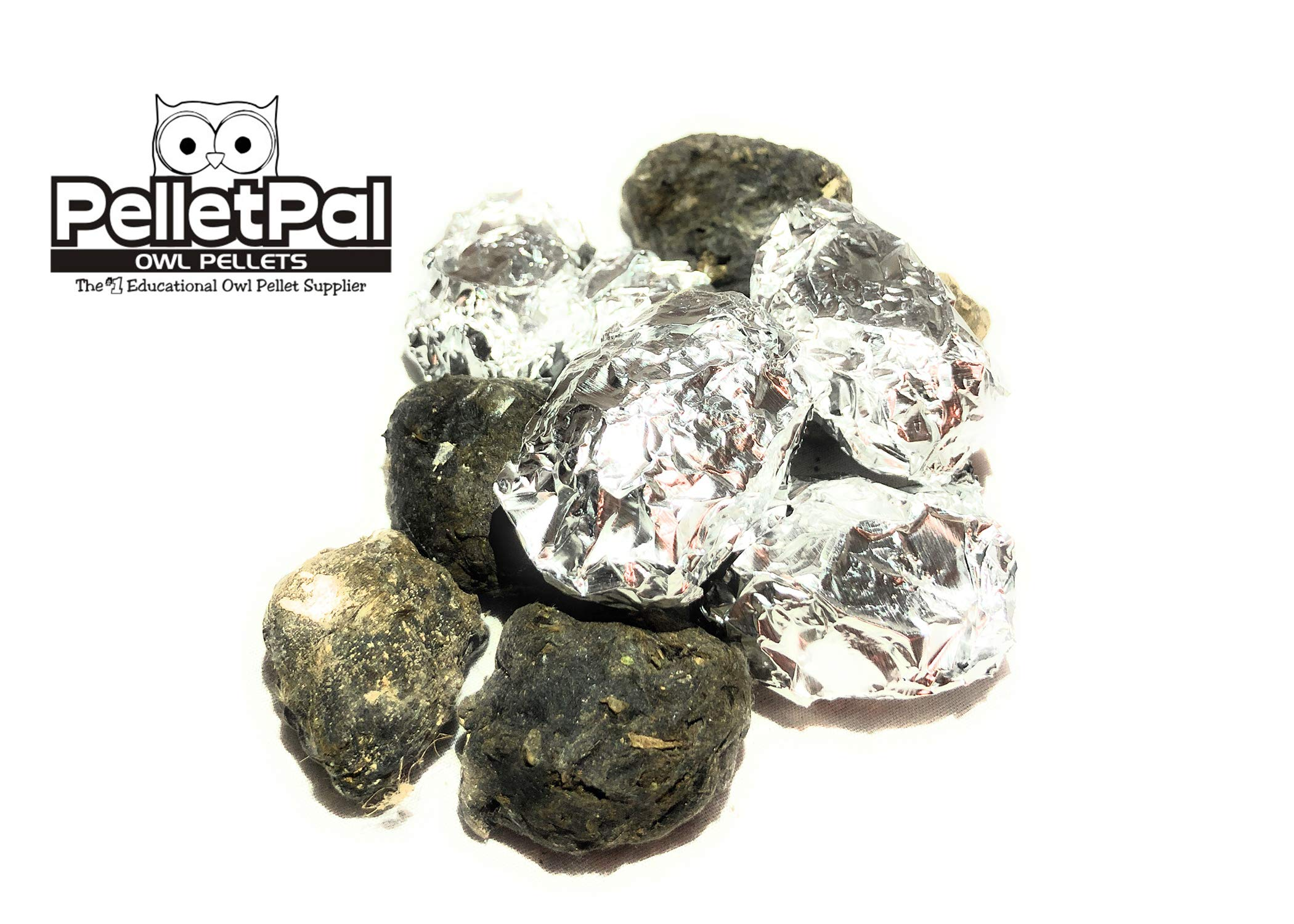 Premium Barn Owl Pellets, Small (Pack of 20) - Free Bone ID Chart & Teaching Guide Included!