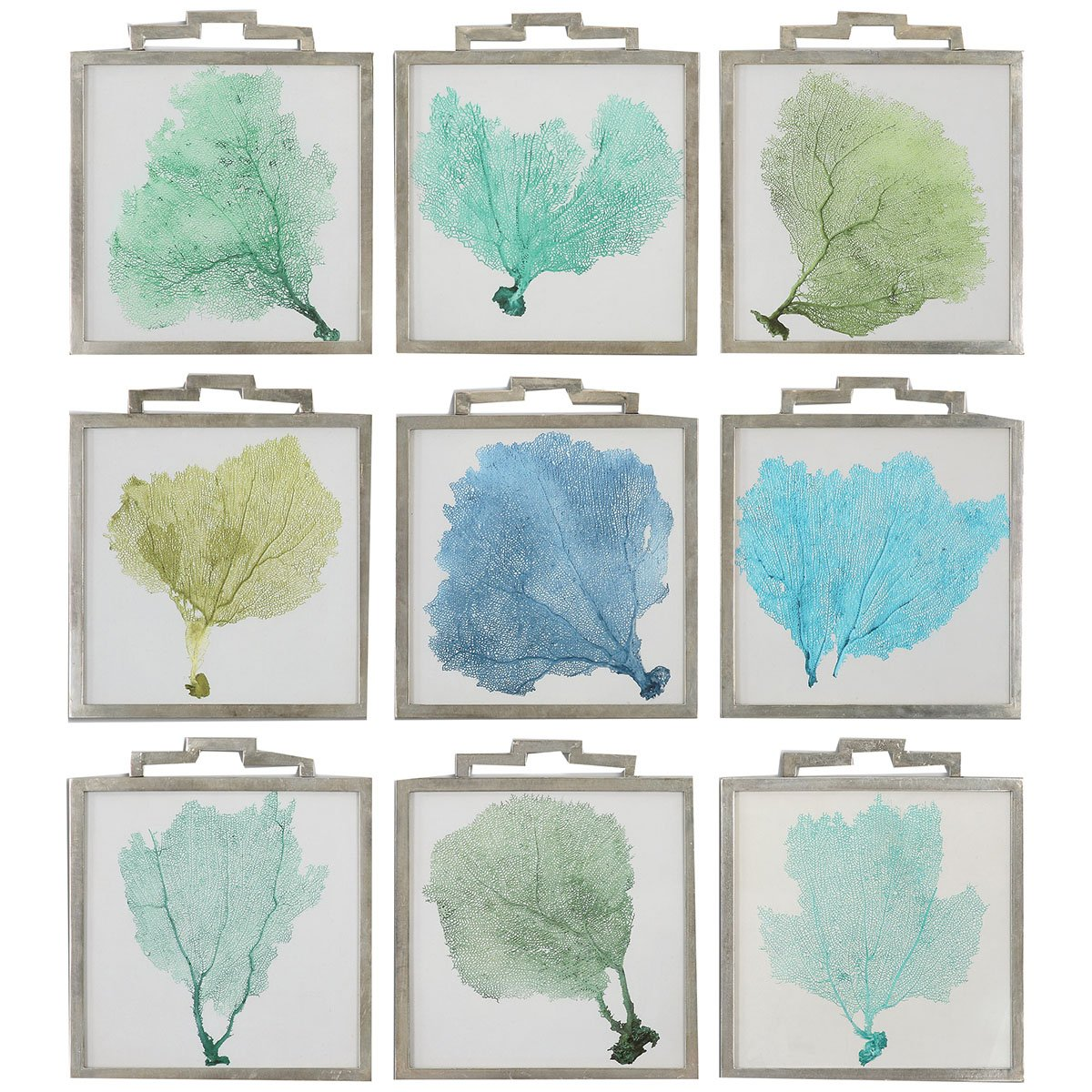 Amazon.com: Uttermost 35239 Sea Fans Framed Art (Set of 9): Posters ...