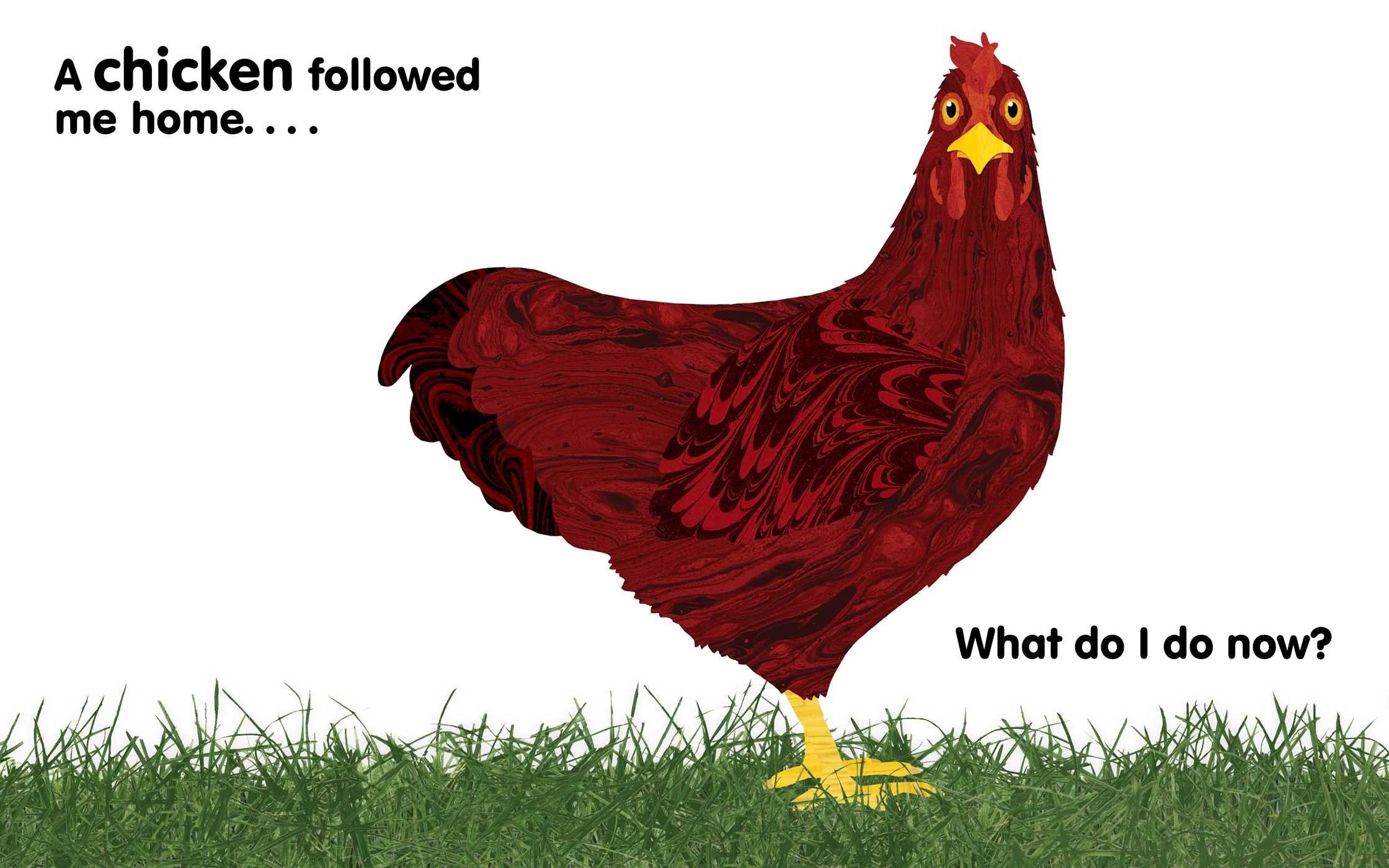 a chicken followed me home questions and answers about a
