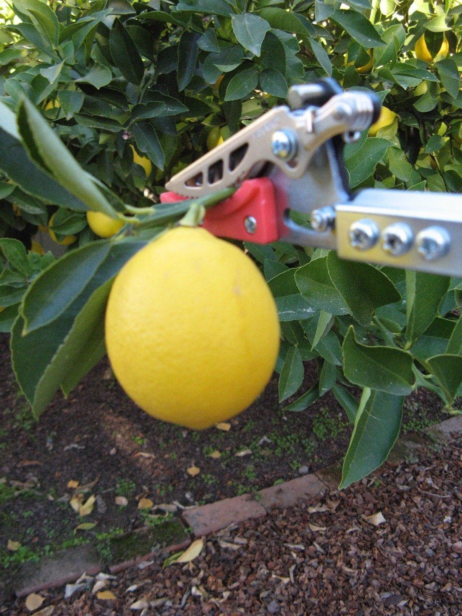 Short Reach Cut & Hold Pruner by Wildflower Seed & Tool Company