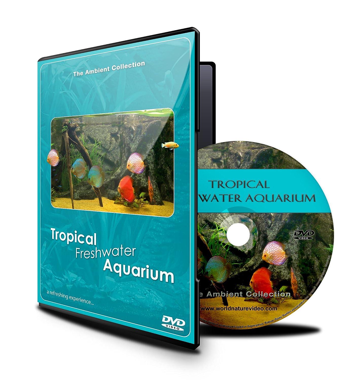 Acuario DVD- Acuario tropical de agua fresca - 100 minutos de Tanques HD/definación alta pescado con música y sonidos de la naturaleza: Amazon.es: The ...