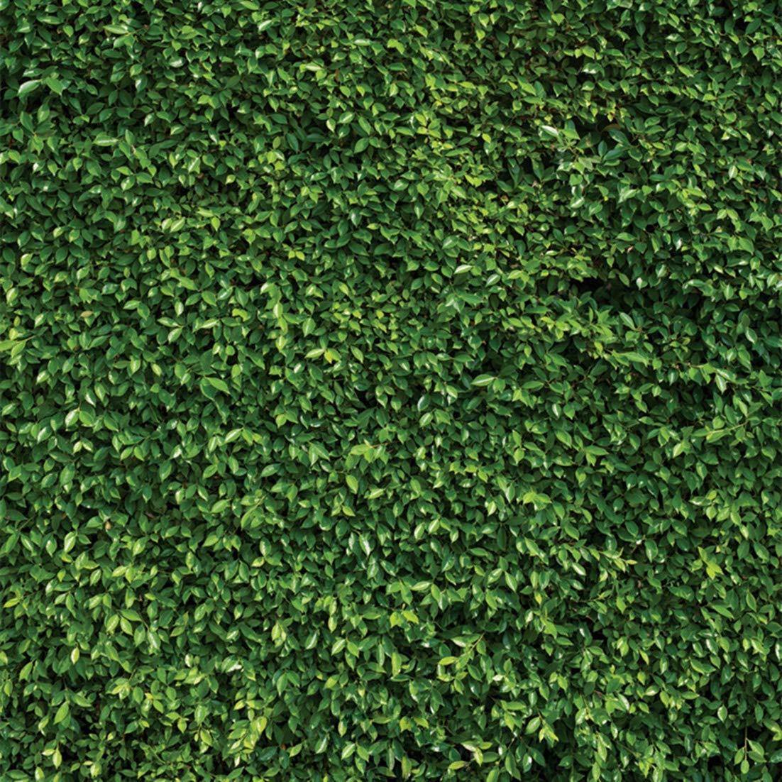 8x8フィート スプリング ナチュラルグリーン 葉 写真 背景 芝生 パーティー 背景 新生児 赤ちゃん 恋人 結婚式 子供 誕生日 バナー 写真スタジオ小道具 RM-038   B07GWWG42M