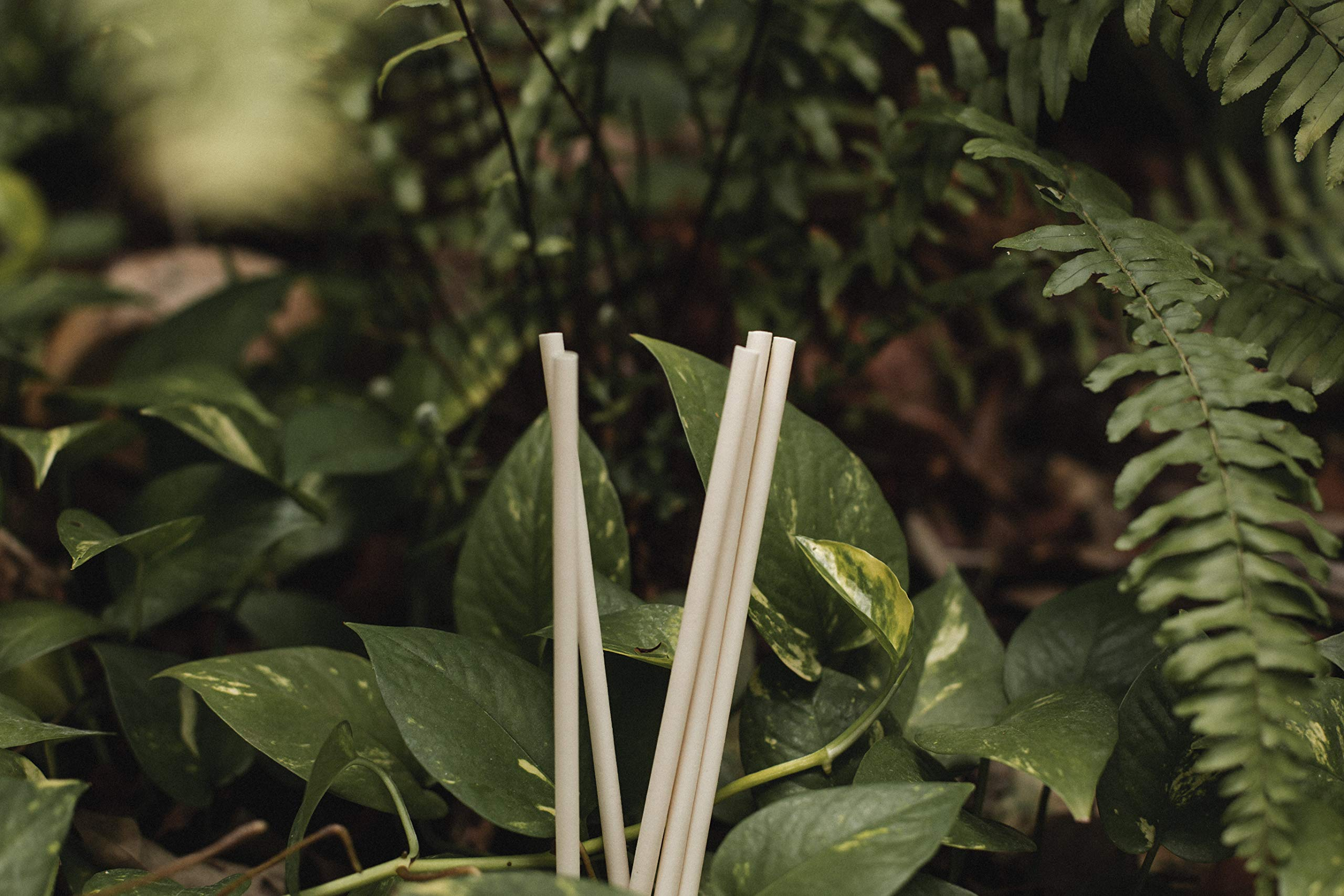 Avocado Seed Straws - Longest Lasting 100% biodegradable Straws - 2000 count, 8.26'' unwrapped by The Avocado Co.