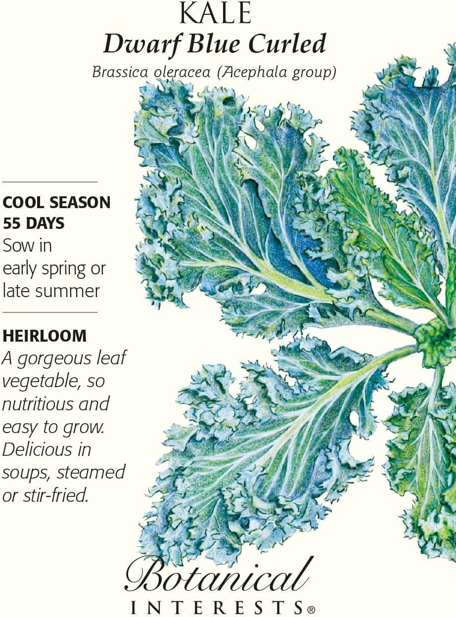 Dwarf Blue Curled Kale Seeds Brassica 3 grams