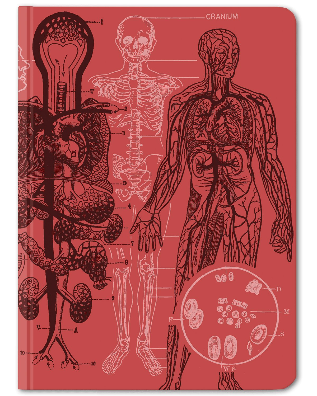 Anatomy Heart & Brain Medical Illustration Notebook