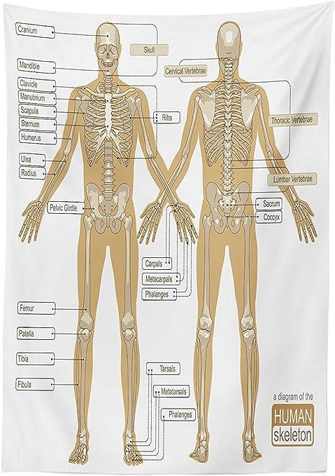 Anatomía Humana Mantel Diagrama De Esqueleto Humano Sistema Con Titled Partes Principales Del Cuerpo Imagen Articulaciones Comedor Cocina Funda Para Mesa Rectangular Color Blanco Café Home Kitchen