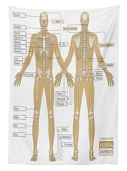 Amazon Com Human Anatomy Tablecloth Diagram Of Human Skeleton