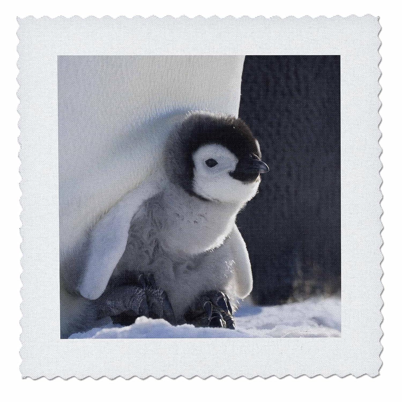 qs/_74188/_4 Keren Su 3dRose Emperor Penguin Quilt Square 12 by 12-inch Antarctica-AN02 KSU0017 Snow Hill Island