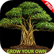 Easy Bonsai Tree For beginners - Best How To Grow Bonzai Plants Tips & Care Instruction UCC Videos, Start Today!