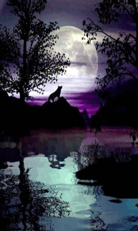 Amazon Com Wolf Night Live Wallpaper Appstore For Android