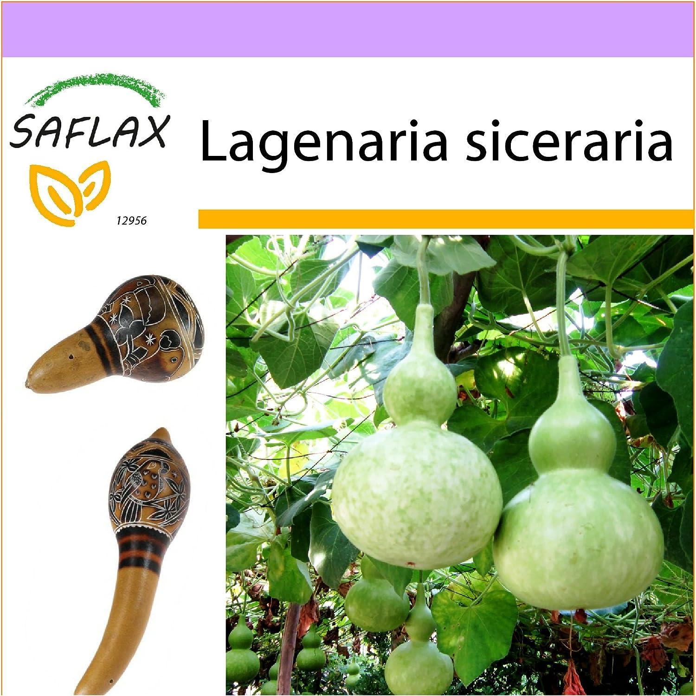 Lagenaria siceraria K/ürbis Birdhouse Gem/üsesamen 10 Samen
