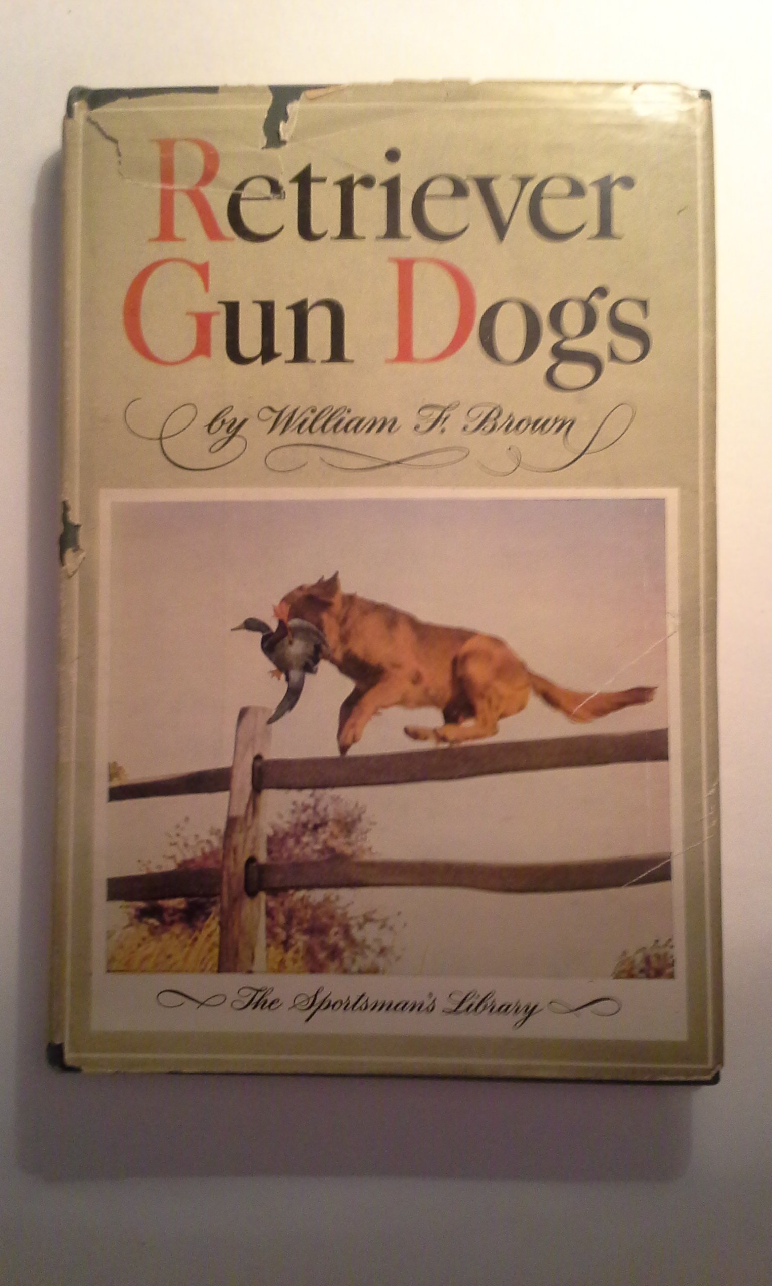 Retriever gun dogs