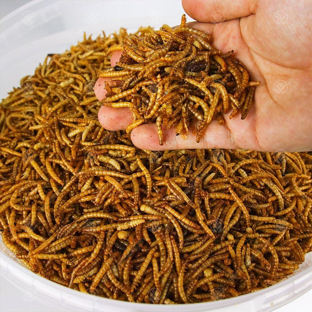 Gusanos de comida secados de pájaros salvajes de 5 kg.
