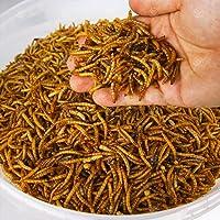 GardenersDream Dried Mealworms - Premium Wild Bird Food Large Chubby Worms …