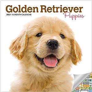 Golden Retriever Puppies Calendar 2021 Bundle - Deluxe 2021 Golden Retriever Puppies Mini Calendar with Over 100 Calendar Stickers (Puppy Gifts, Office Supplies)