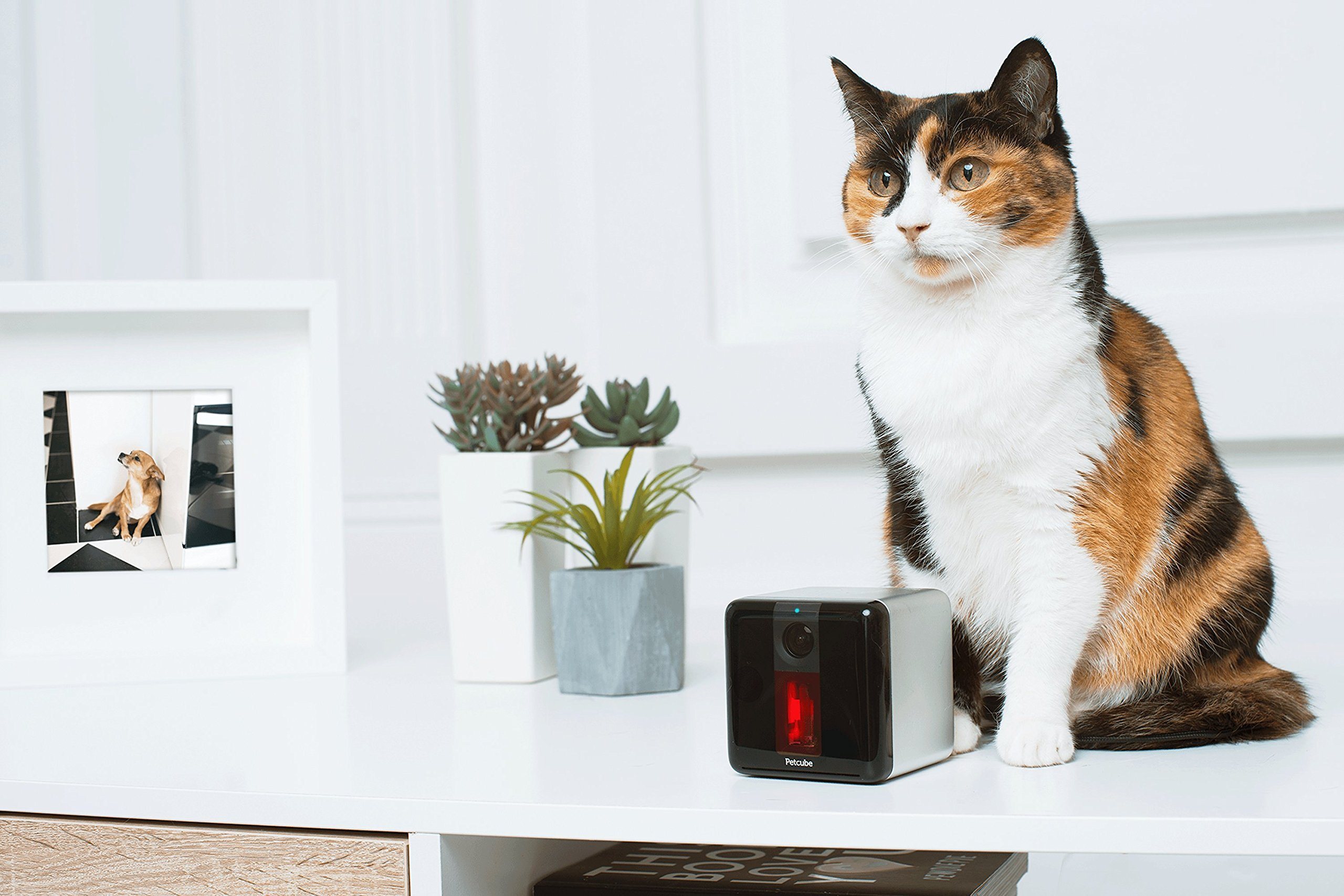 Petcube Play Pet Camera with Interactive Laser Toy. Monitor Your Pet Remotely with HD 1080p Video, Two-Way Audio, Night Vision, Sound and Motion Alerts. Compatible with Alexa (Renewed) by Petcube (Image #2)