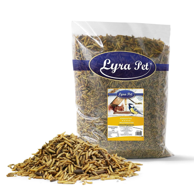 Lyra Pet Soldatenfliegenlarven 1 kg Futter für Repilien Teichfische und Vögel Lyra Pet GmbH