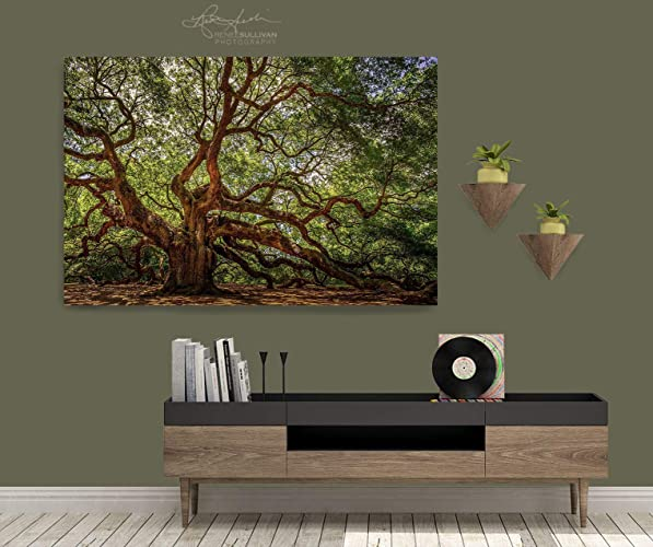 4ab0d3f201 Amazon.com: Angel Oak Tree/Charleston SC/CANVAS or METAL/Ready-to ...