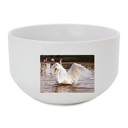 Swan, aves, naturaleza, animales, blanco bol de cerámica: Amazon ...