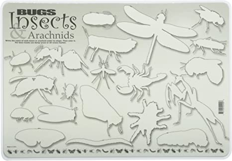 Amazon Com Painless Learning Bugs Insects And Arachnids Placemat Multicolor Home Kitchen