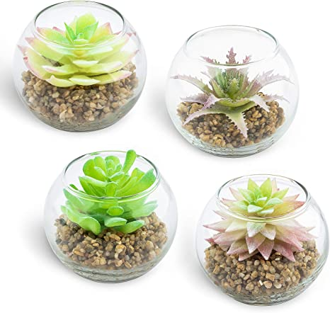Amazon Com Coowas 4 Set Each 3 34x2 75 Inch Artificial Succulent Plants In Clear Glass Pots Tabletop Greenery For Home Bedroom Office Cafe Shop Kitchen Dining