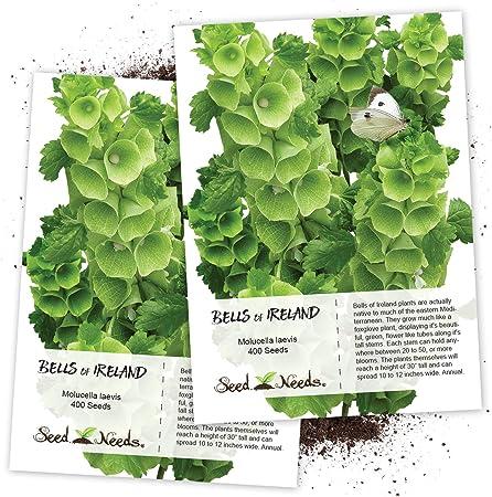 Amazon.com: Paquete de 400 semillas, campanas de irlanda ...