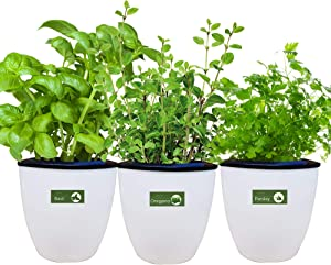 Environet Self Watering Planter with Heirloom Herb Seeds and Coco Potting Soil, Indoor Herb Garden Growing Kit, Modern Decorative White Garden Plant Kit, 3 Pack(Basil, Parsley, Oregano)