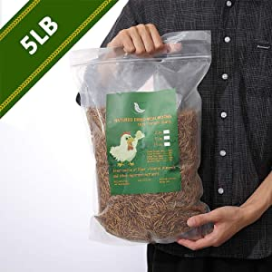 WAMSOFT Non-GMO Dried Mealworms,5LB 100% Natural Large Size No Moisture,Treats for Birds Chickens Hedgehog Hamster Fish Reptile Turtles