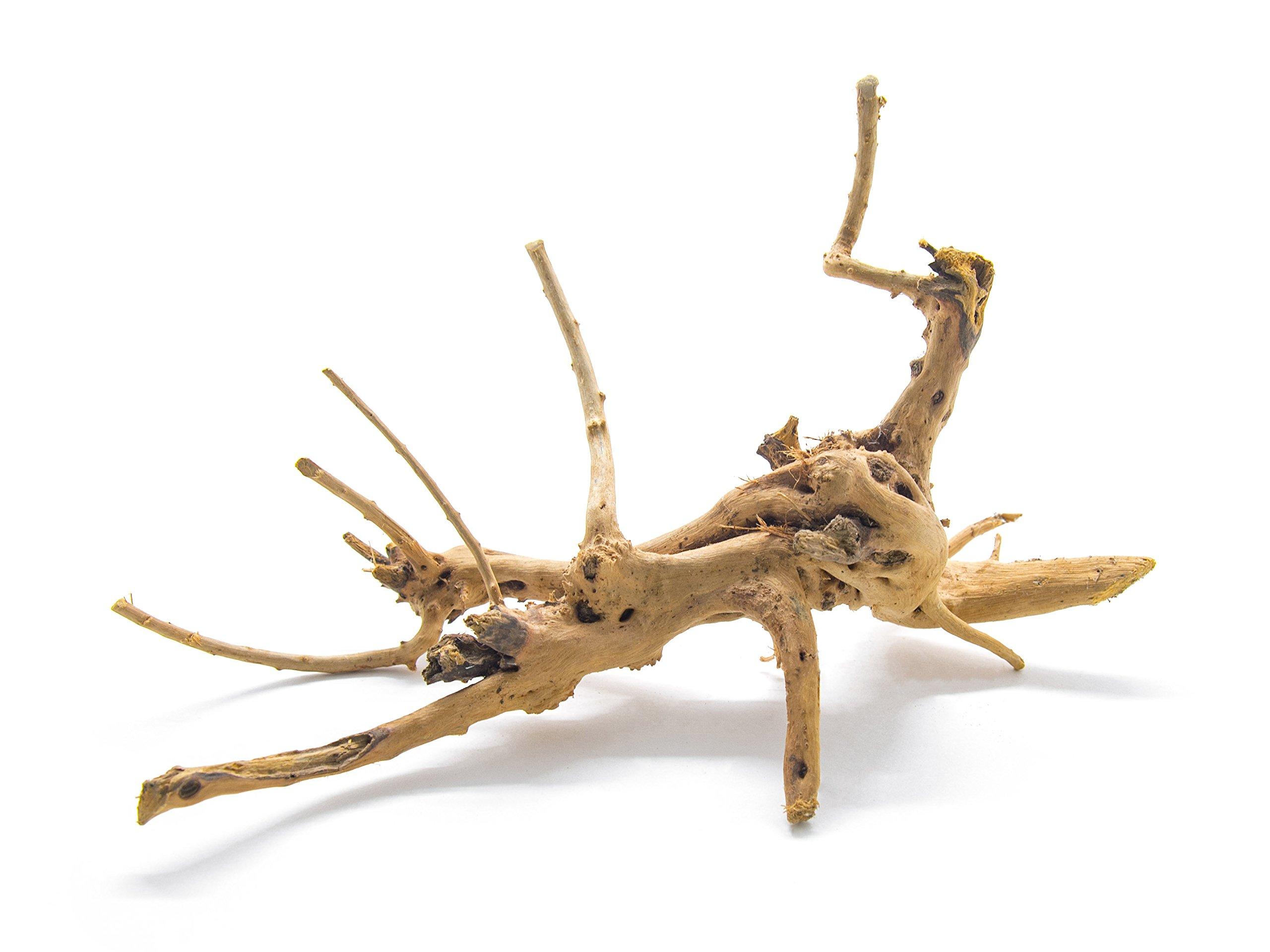 Aquatic Arts 1 Nano Piece of Spider Wood aka Azalea Natural Aquarium Driftwood, 4-6'' by Aquatic Arts