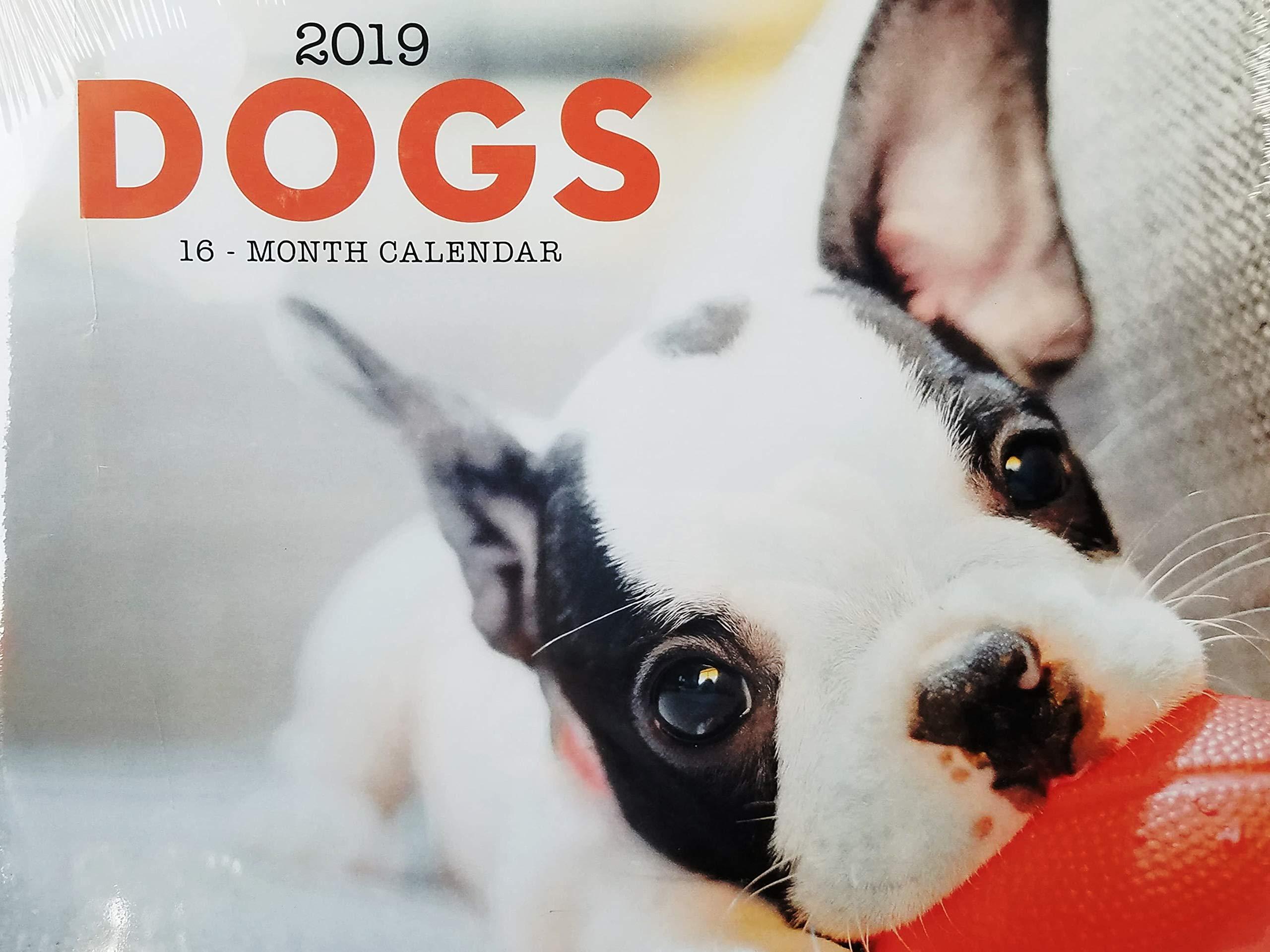 2019 16-Month Dogs Wall Calendar