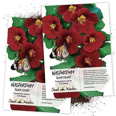 Seed Needs, Black Velvet Nasturtium (Tropaeolum Minus) Twin Pack of 110 Seeds Each : Garden & Outdoor