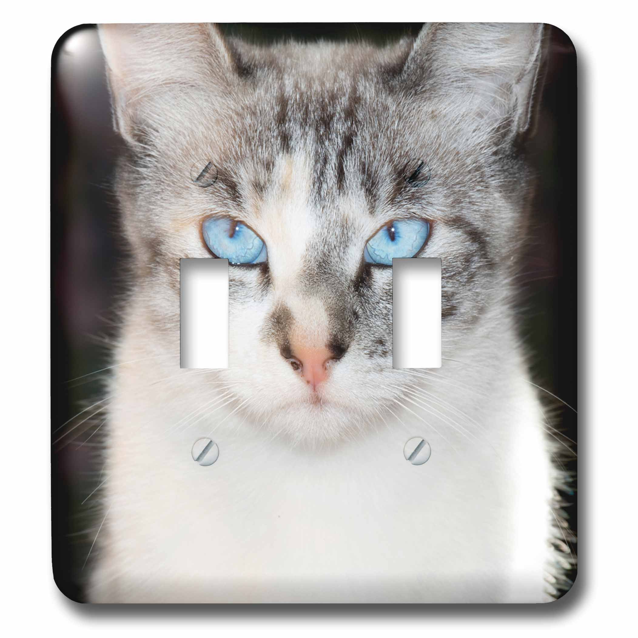 3dRose Danita Delimont - Cats - USA, California. Lynx point Siamese cat portrait. - Light Switch Covers - double toggle switch (lsp_278512_2)