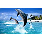 """DOLPHINS canvas picture 16""""x20"""" framed and ready to hang"""