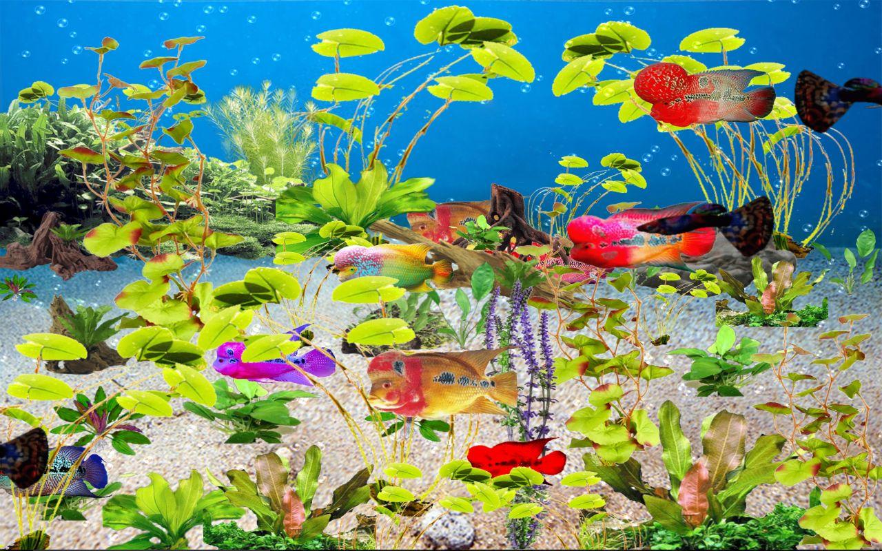 flowerhorn-tropical-freshwater-aquarium-download