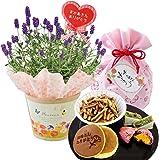 花由 母の日ギフト ラベンダーの鉢植え&阿波の和菓子お楽しみ巾着