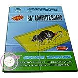 piège plaquette coll anti-souris, anti-rat, 2 pièces