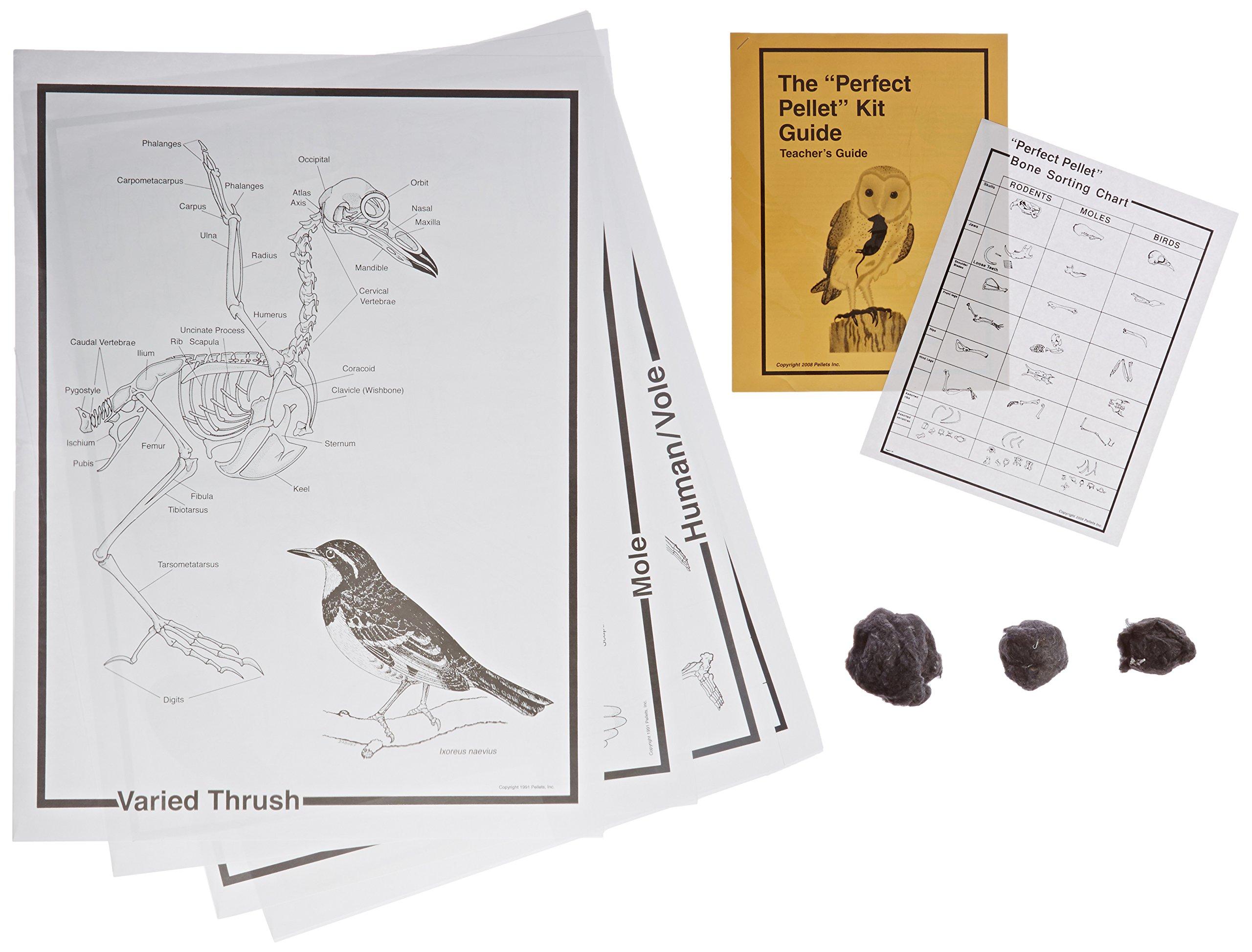 Pellets Perfect Pellet Deluxe Classroom Kit