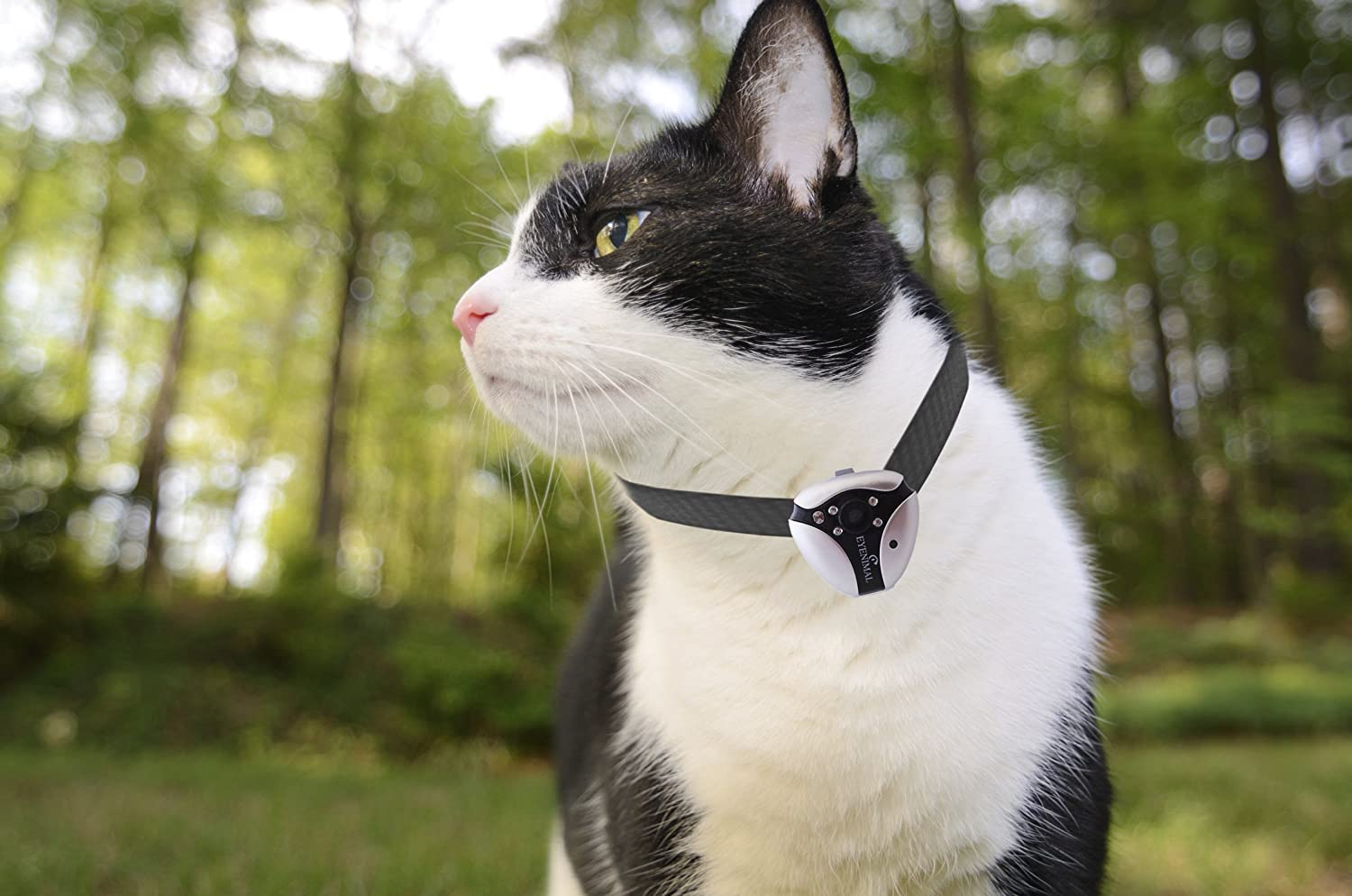 Cat mini collar ring camera on Amazon