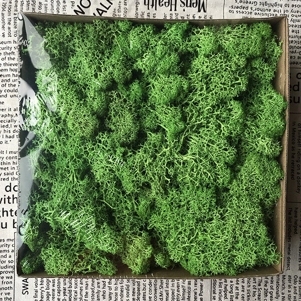 Ancdream DIY Material Preserved Moss Champagne 10g per pack