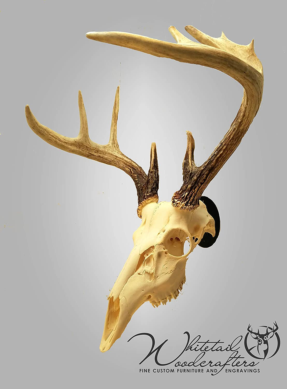 No Skull Skull Hook Skull Mount Display Skull Hanger Mounting Bracket